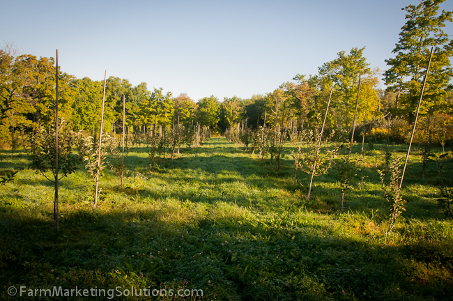 camps road farm orchard