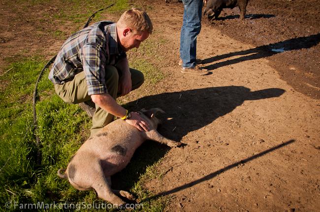 pastured pigs-0768