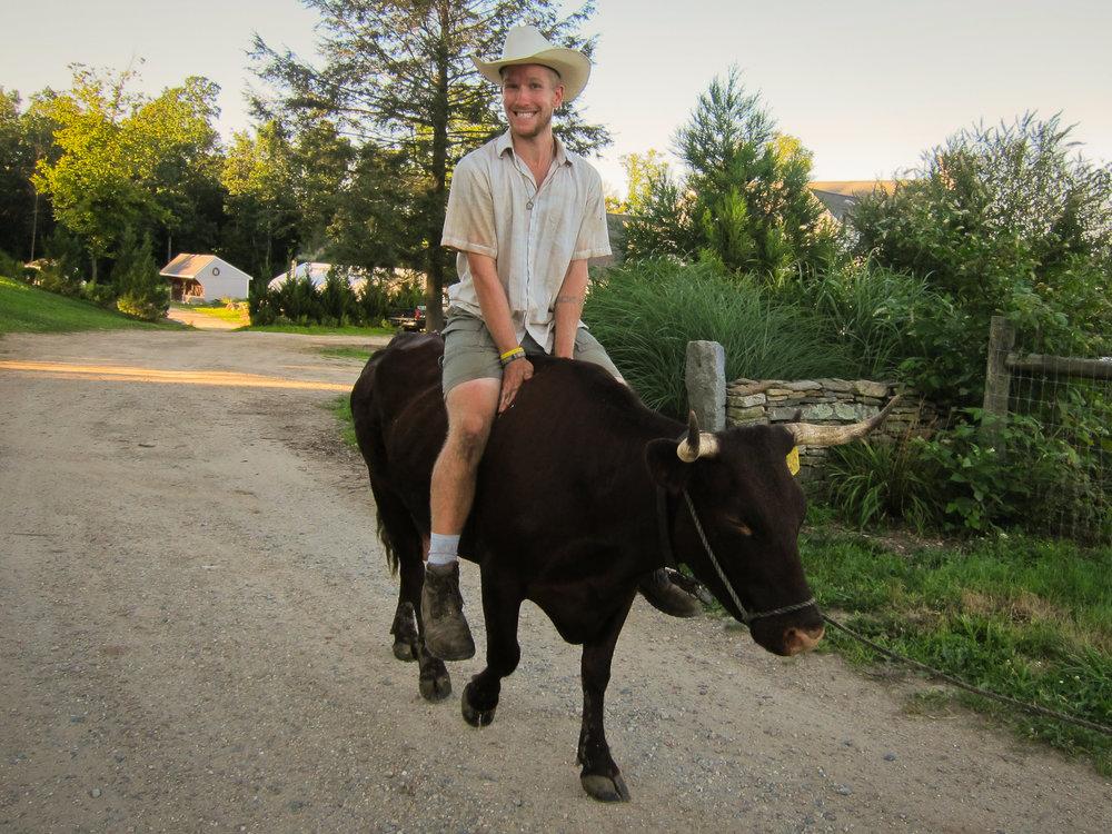 Like I said, I learned to love working with livestock.