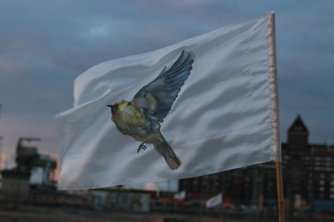 GH Birds 1