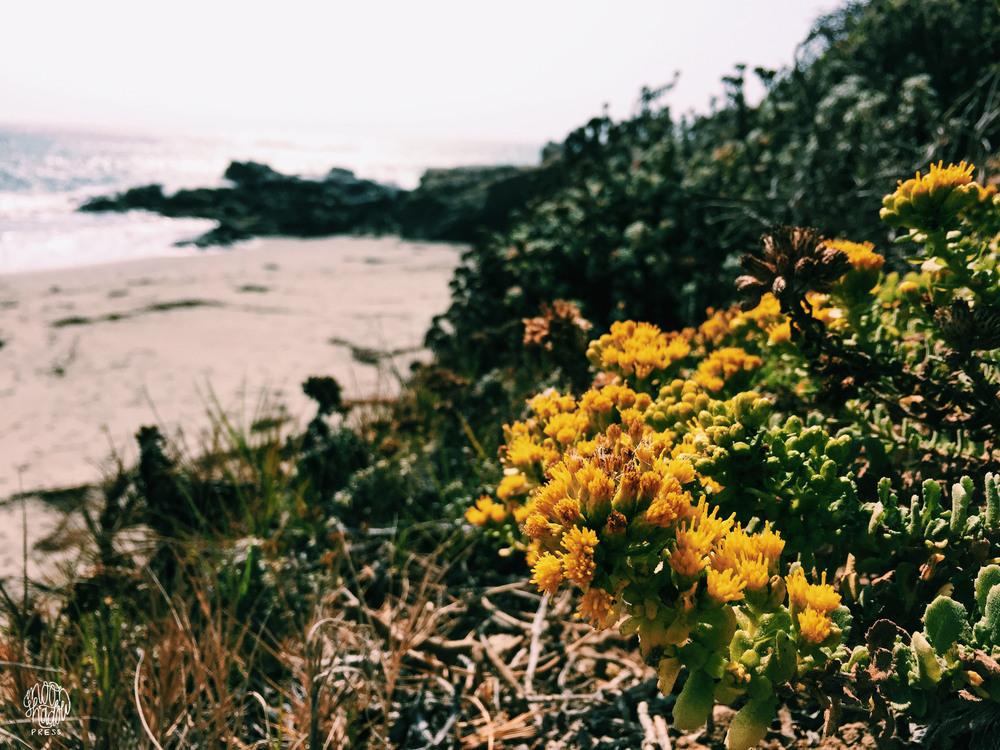 Coast_10L.jpg