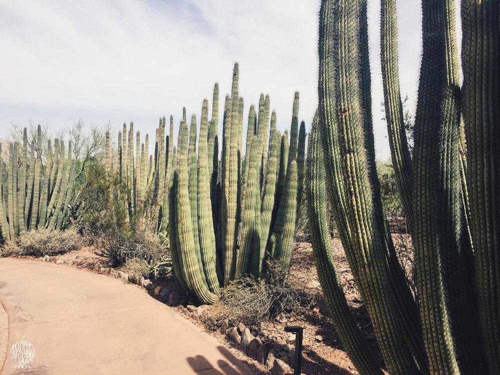 Phoenix8_L.jpg