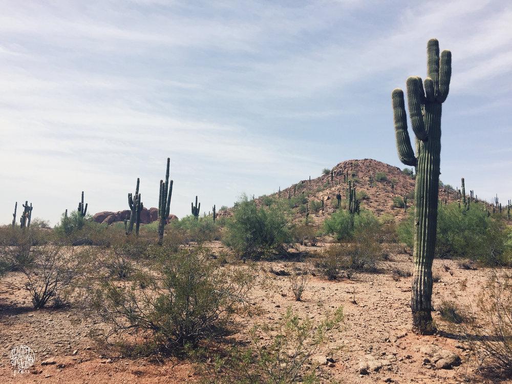 Phoenix10_L.jpg