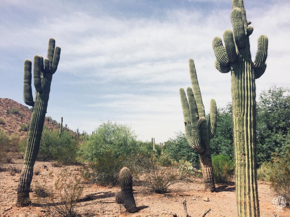 Phoenix11_L.jpg