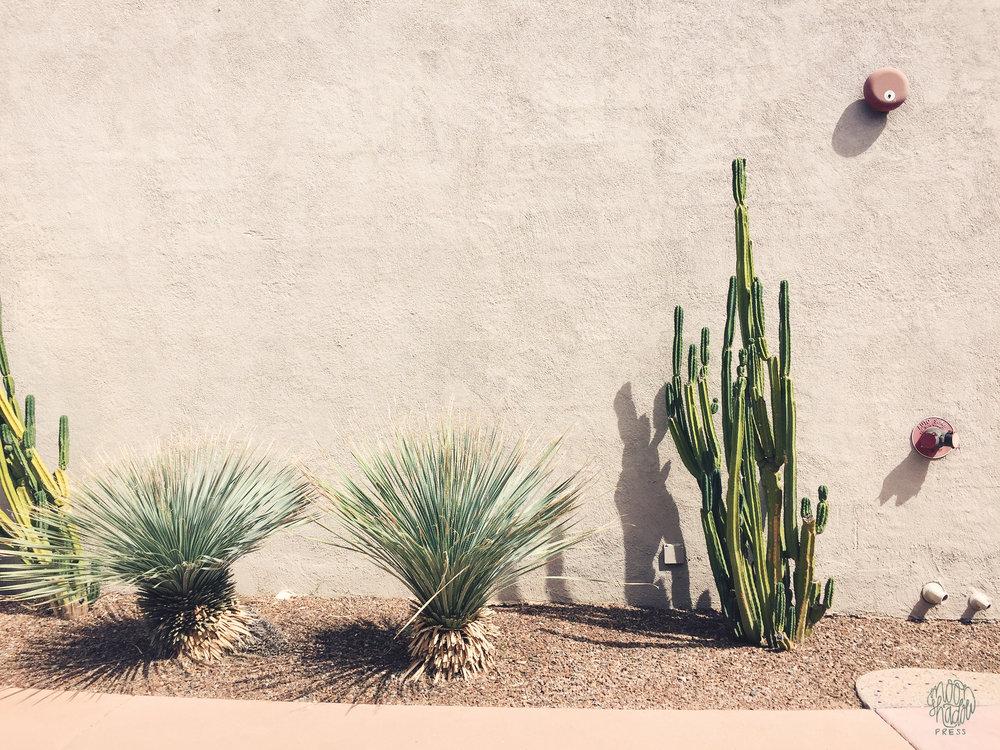 Phoenix1_L.jpg