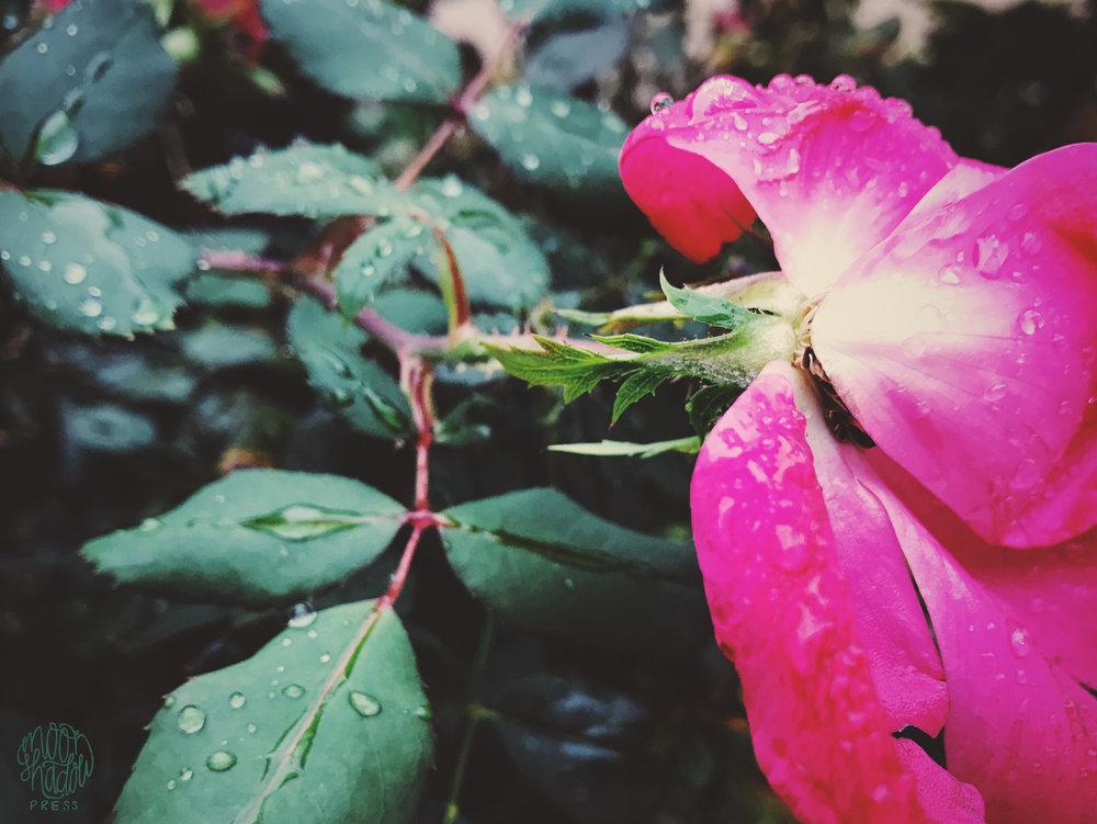 roses4L.jpg