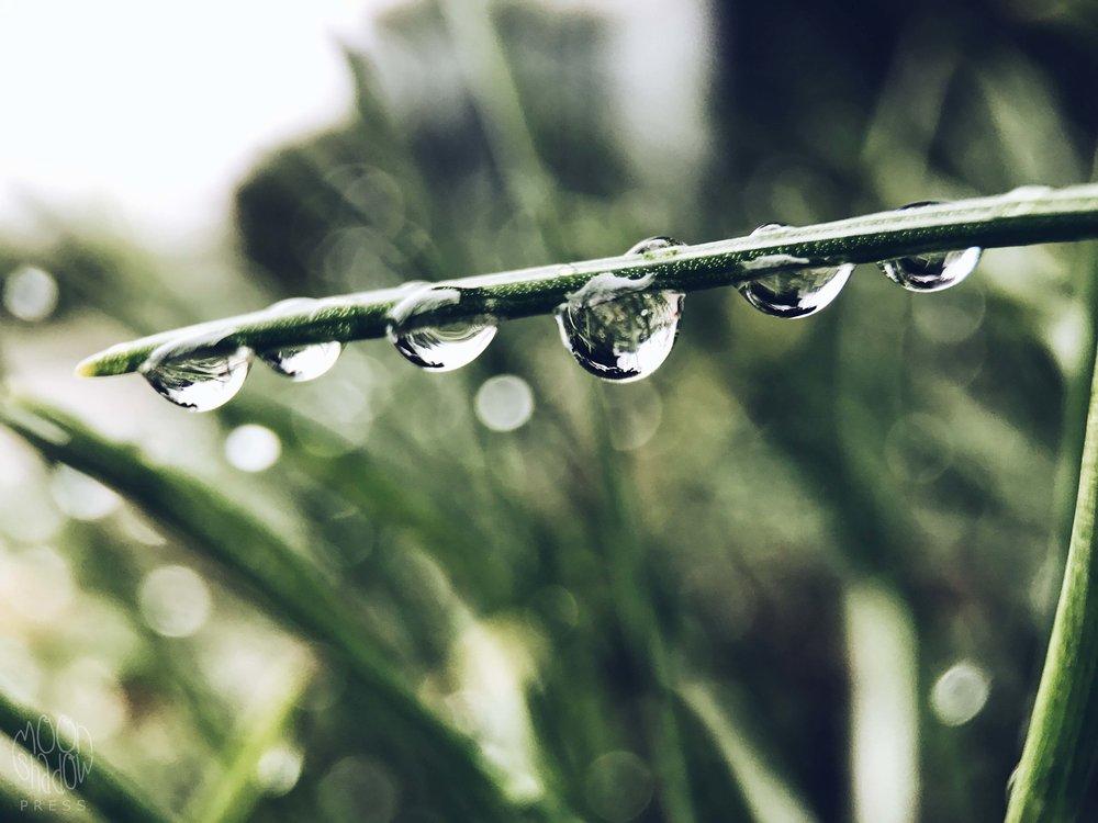 Rain_drop_6.jpg