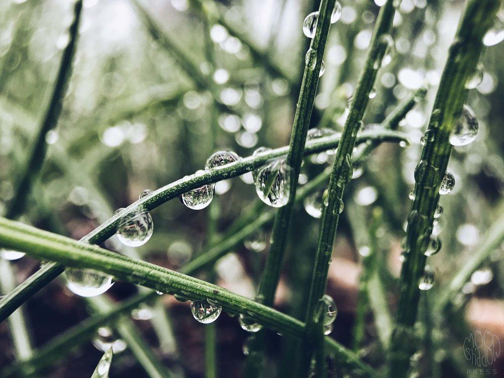 Rain_drop_18.jpg