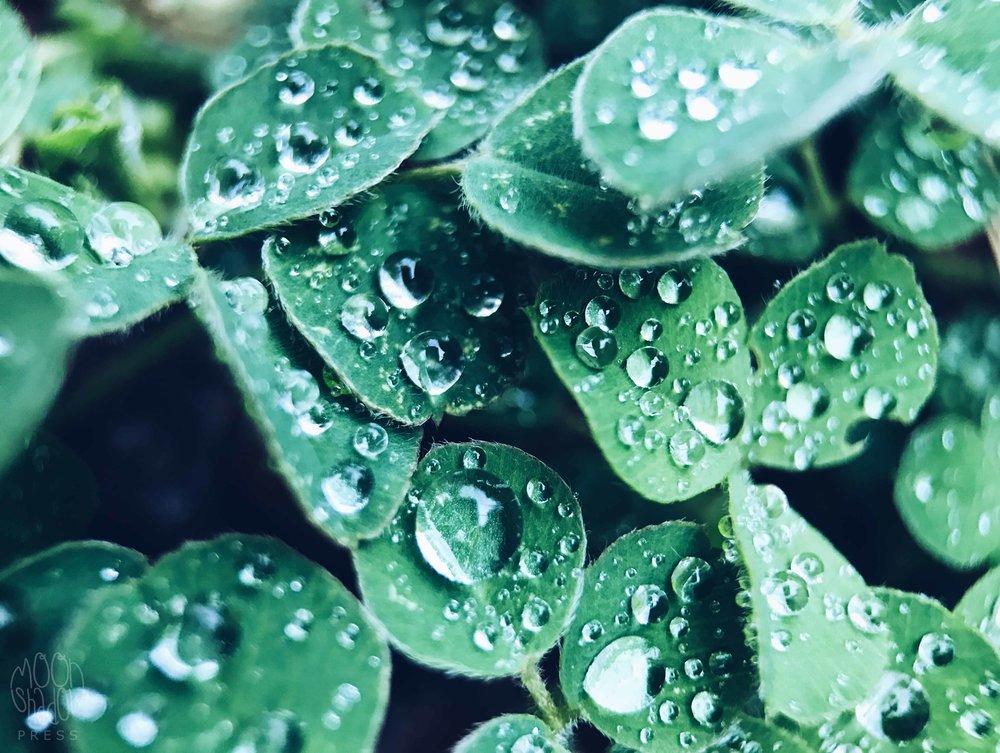 Rain_drop_16.jpg