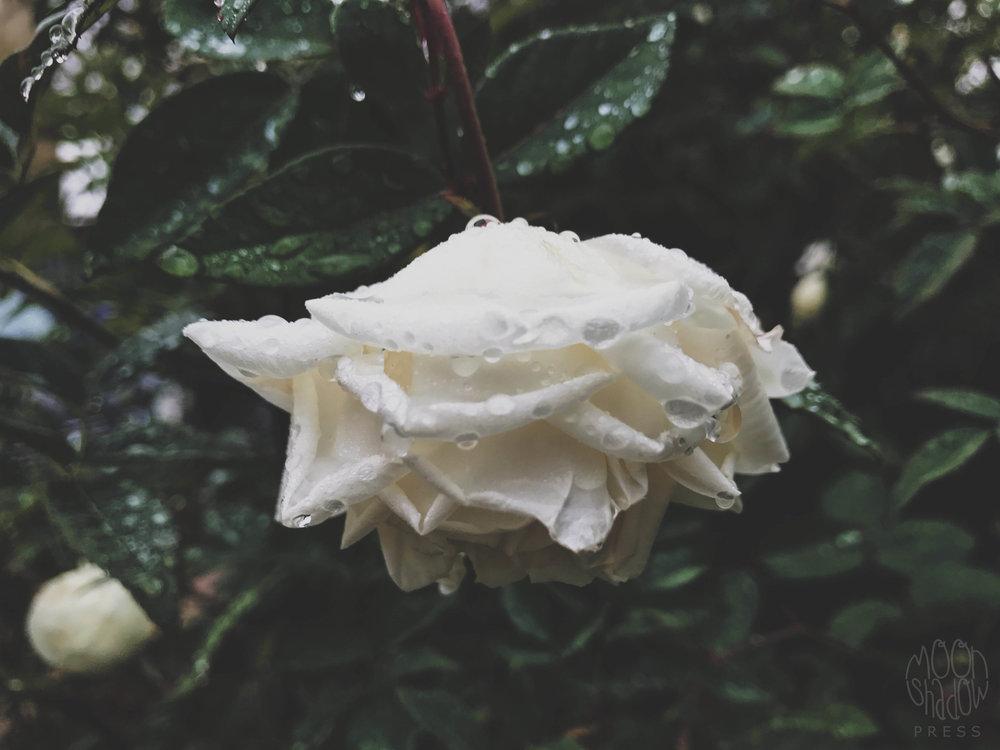 B-Rain2.jpg