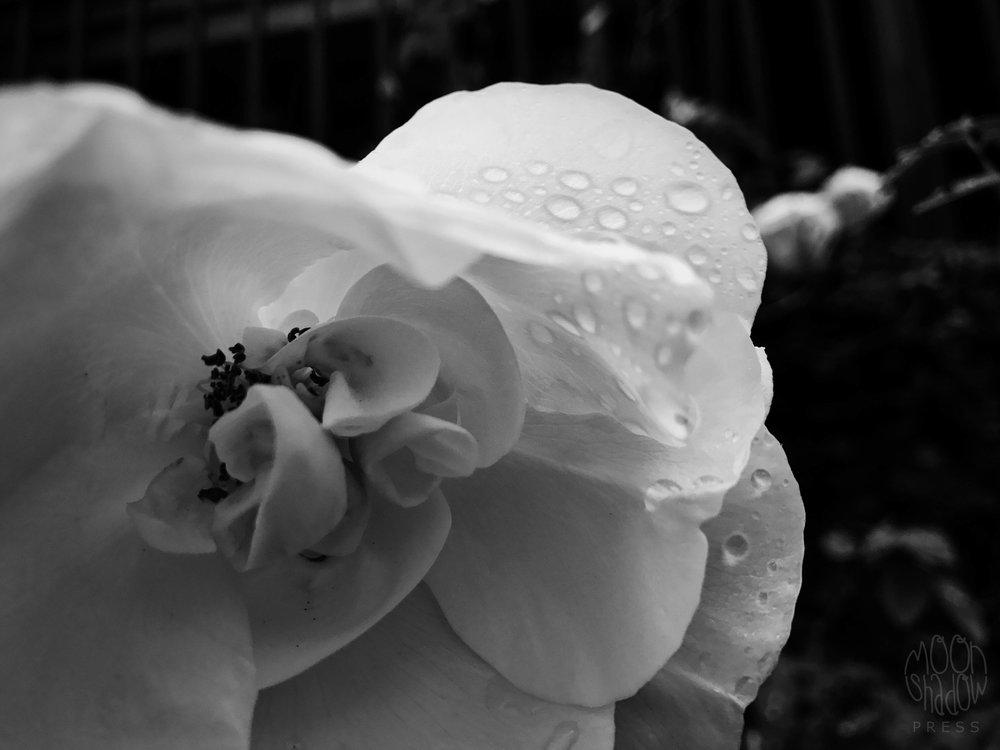 B-Rain6.jpg