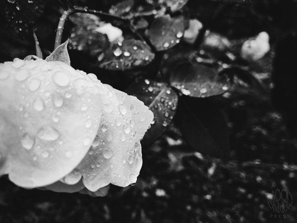 B-Rain9.jpg