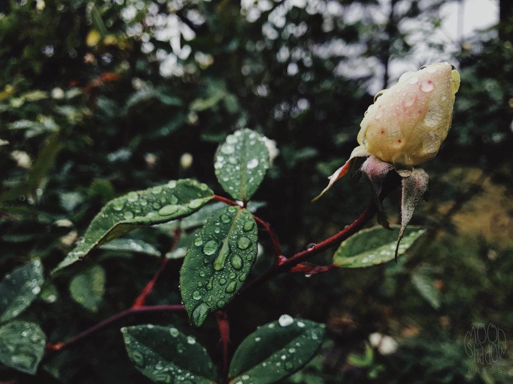 B-Rain10.jpg