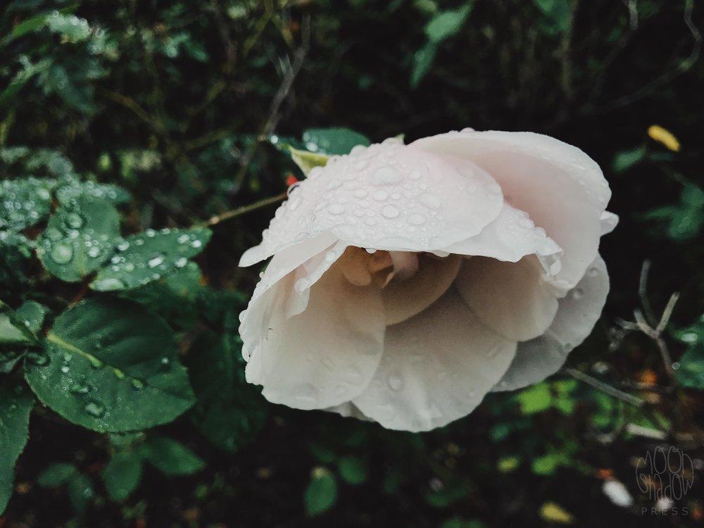 B-Rain12.jpg