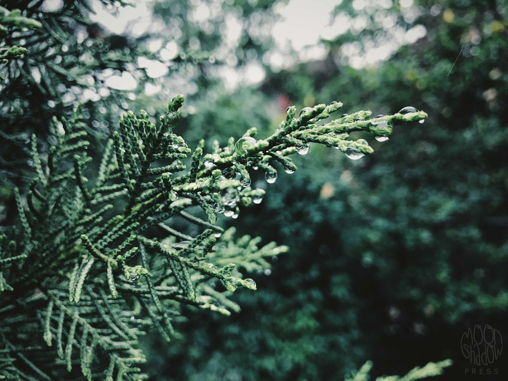 B-Rain15.jpg