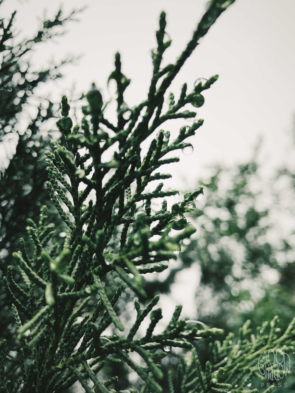 B-Rain14.jpg
