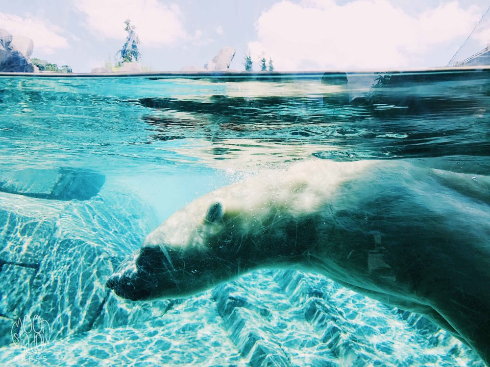 PolarBearBlue1L.jpg
