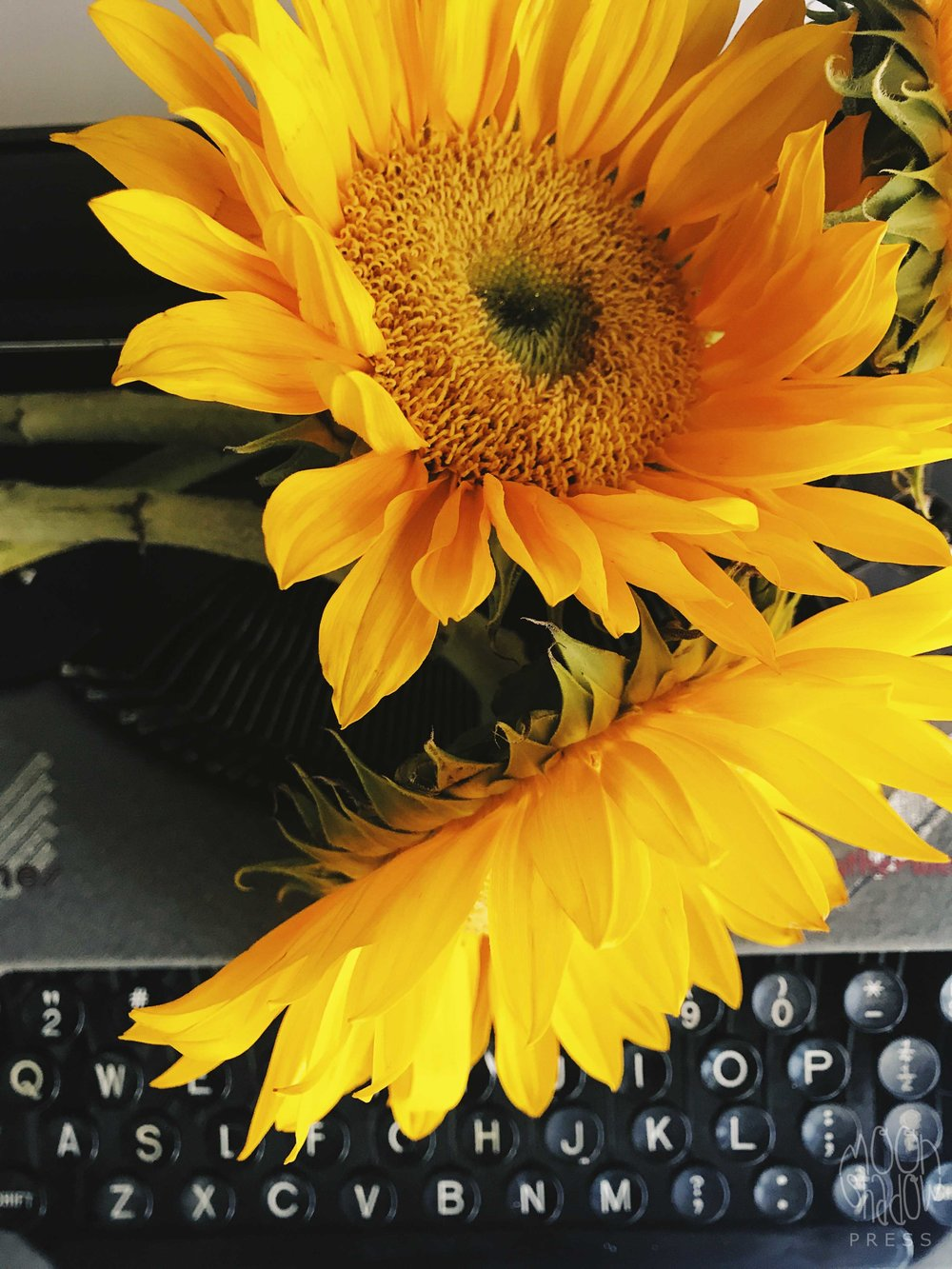 Sunflowers20L.jpg