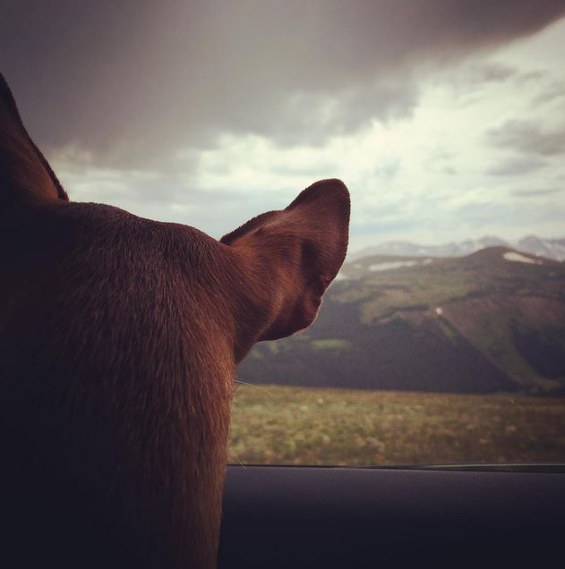 #ZivatheMinPin looking upon the mountains this weekend