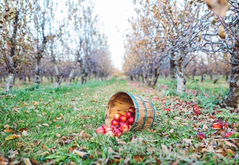 Tabora Farms-18.jpg