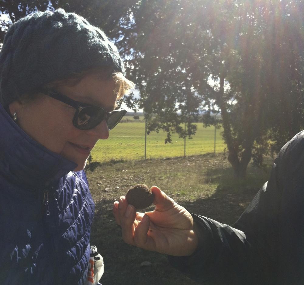 Truffling in Spain