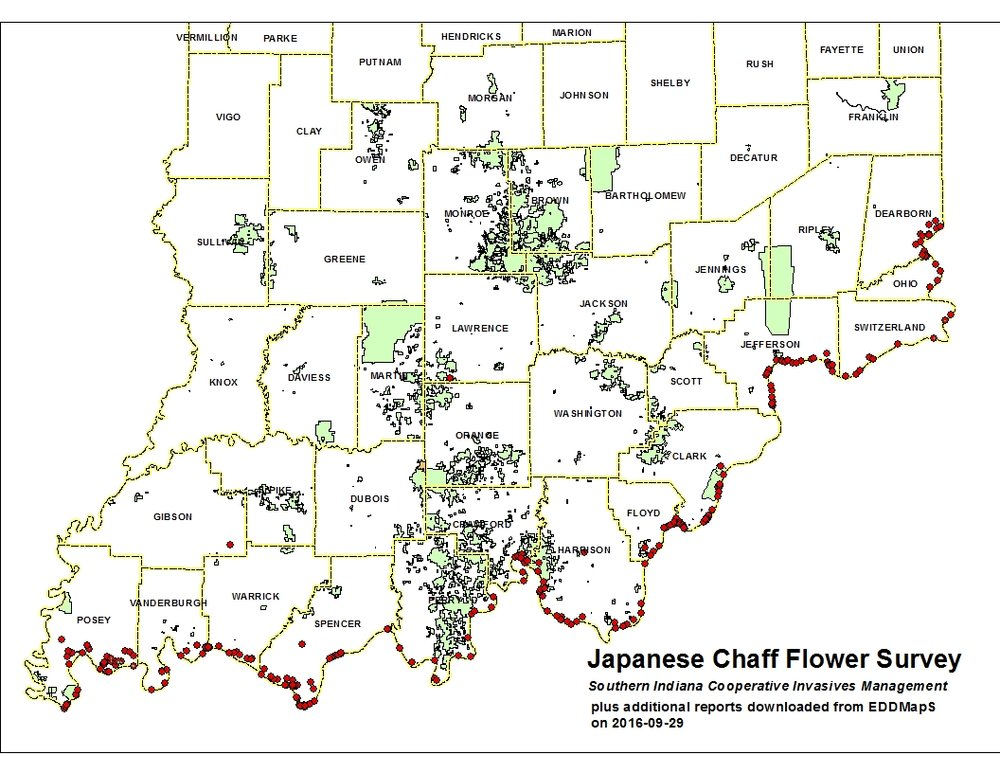 Chaff Flower Survey Results — Southern Indiana Cooperative Invasives ...
