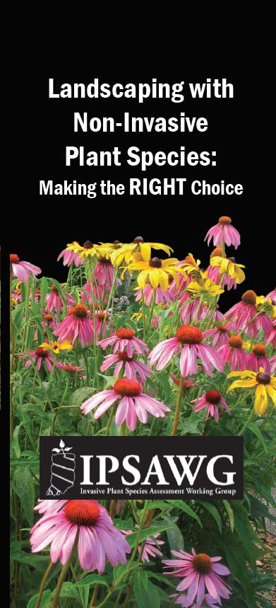 IPSAWG-Brochure-Pic.JPG