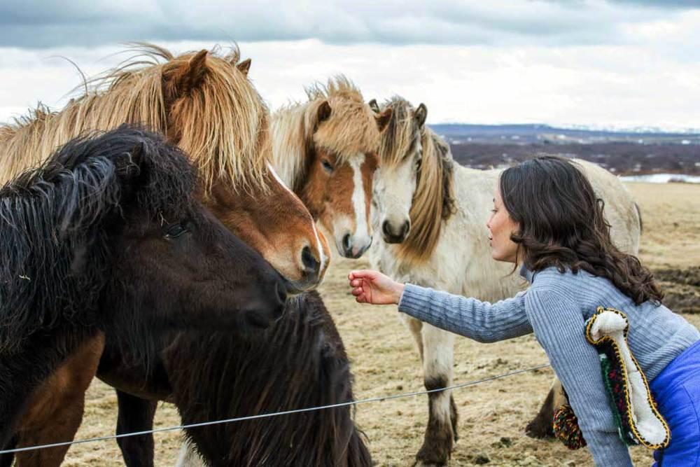 Icelandic-Horses-Iceland-Toura.jpg