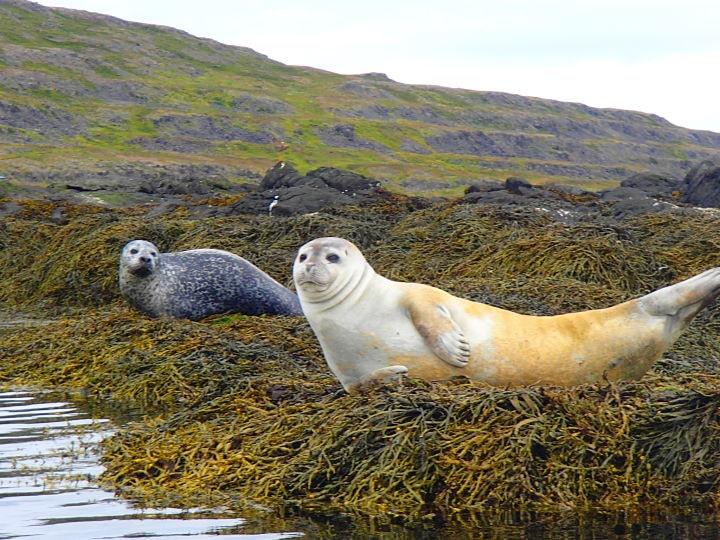 iceland tour seals-min.jpg