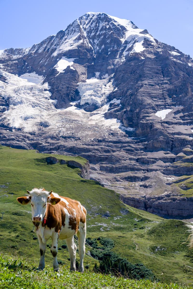 swiss alps hiking tour.jpg