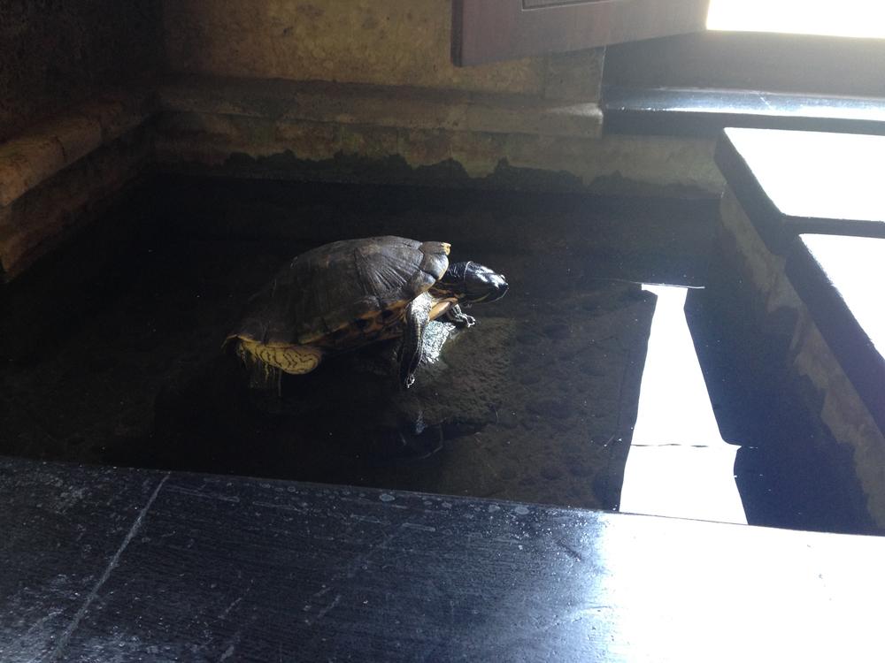 m_Bali turtle.jpg