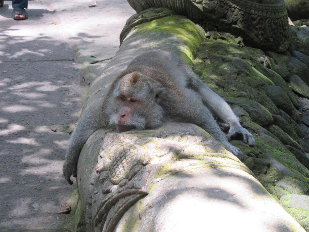 m_Ubud_monkey park.jpg
