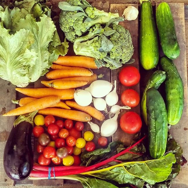 Week 2: Magenta lettuce, broccoli, fresh garlic, zucchini, cucumber, tomatoes, pearl onions, swiss chard, cherry tomatoes, carrots, eggplant #csa #eatthefarm #knowyourfarmer #familyfarm