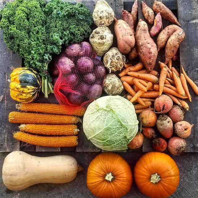 Final Bounty Season delivery: kale, celeriac, sweet potatoes, carrots, golden beets, pie pumpkin, savory cabbage, butternut squash, popcorn, Peter Wilcox potatoes, Carnival squash 💕🚜 #csa #eatthefarm #supportlocal #organic