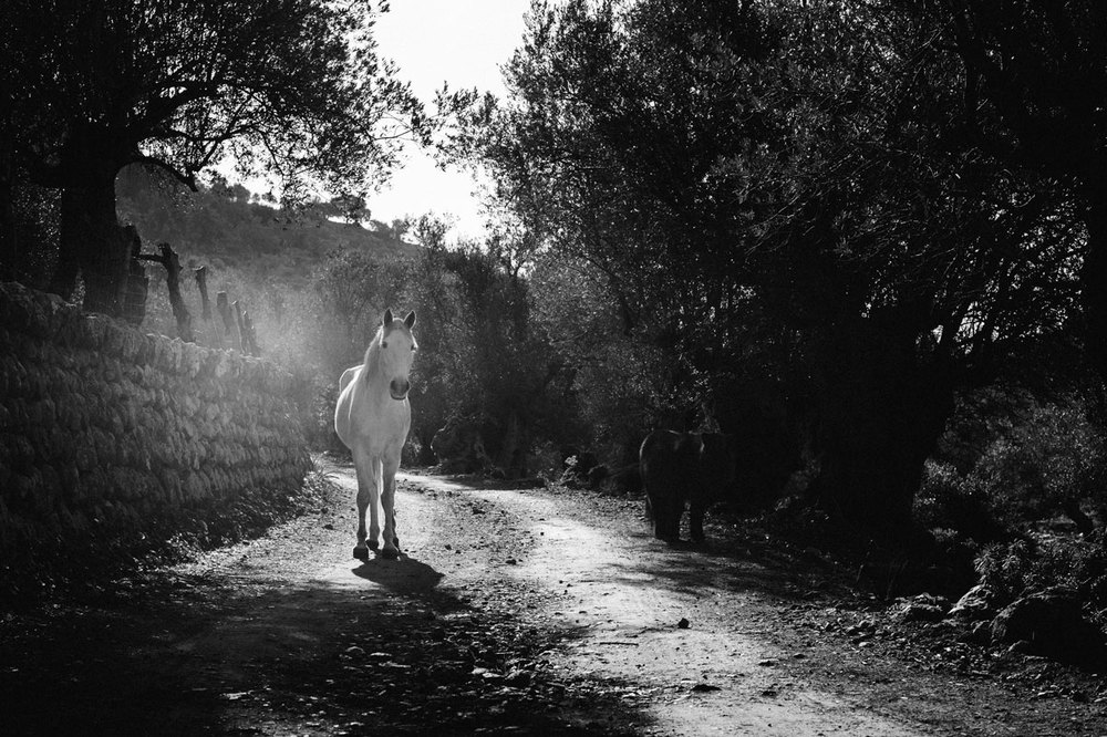 © SUN KING by DELAFOI