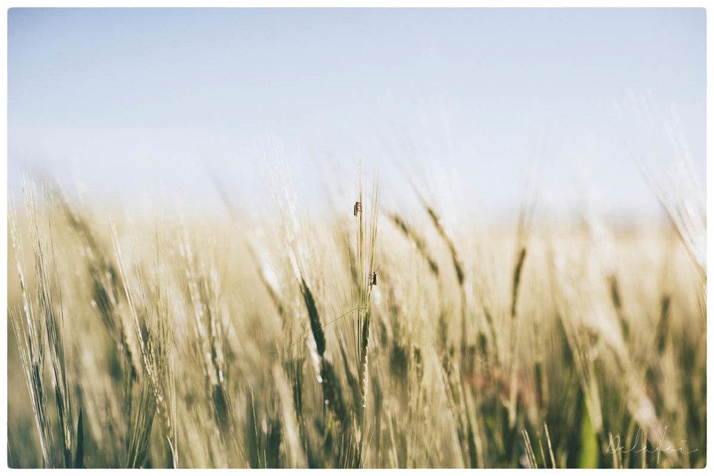 © HORISONT (ALLTID LJUS) by DELAFOI