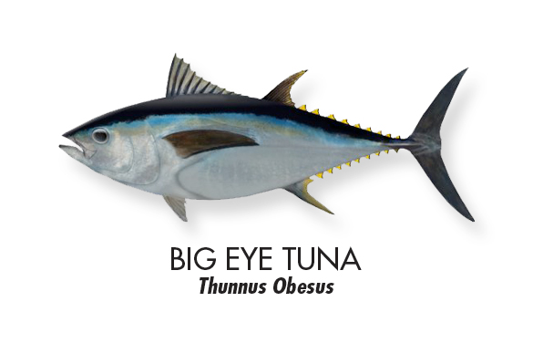 BIG-EYE-TUNA.jpg