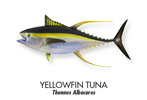 YELLOWFIN-TUNA.jpg