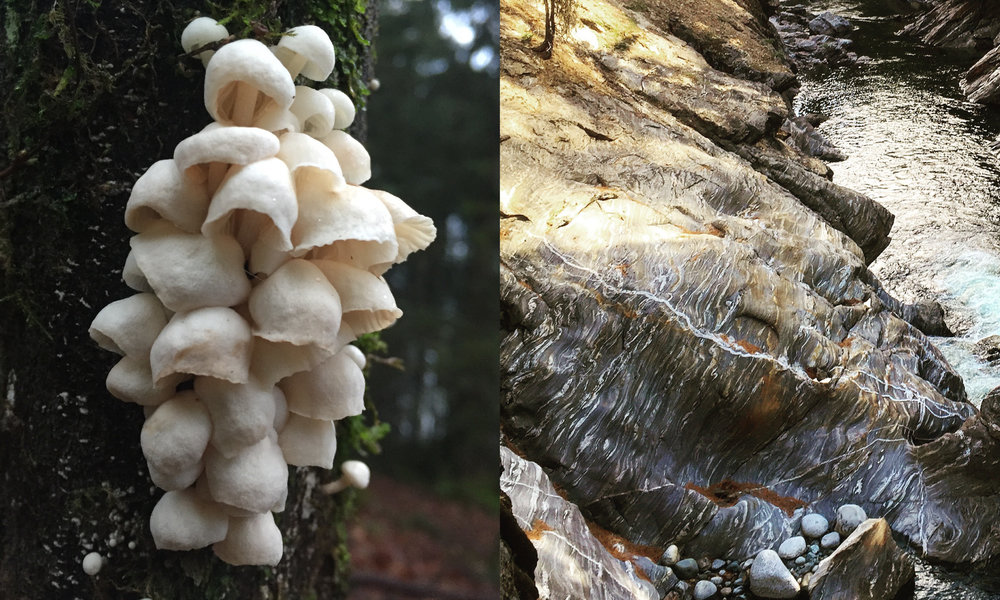 These two photos embody the design I came up with. She's a fanatic for amazing looking mushrooms and posts the most incredible pictures of all the creatures she's come across on her hikes. The water worn rock blew their minds when they came across it on a hike near Leavenworth.