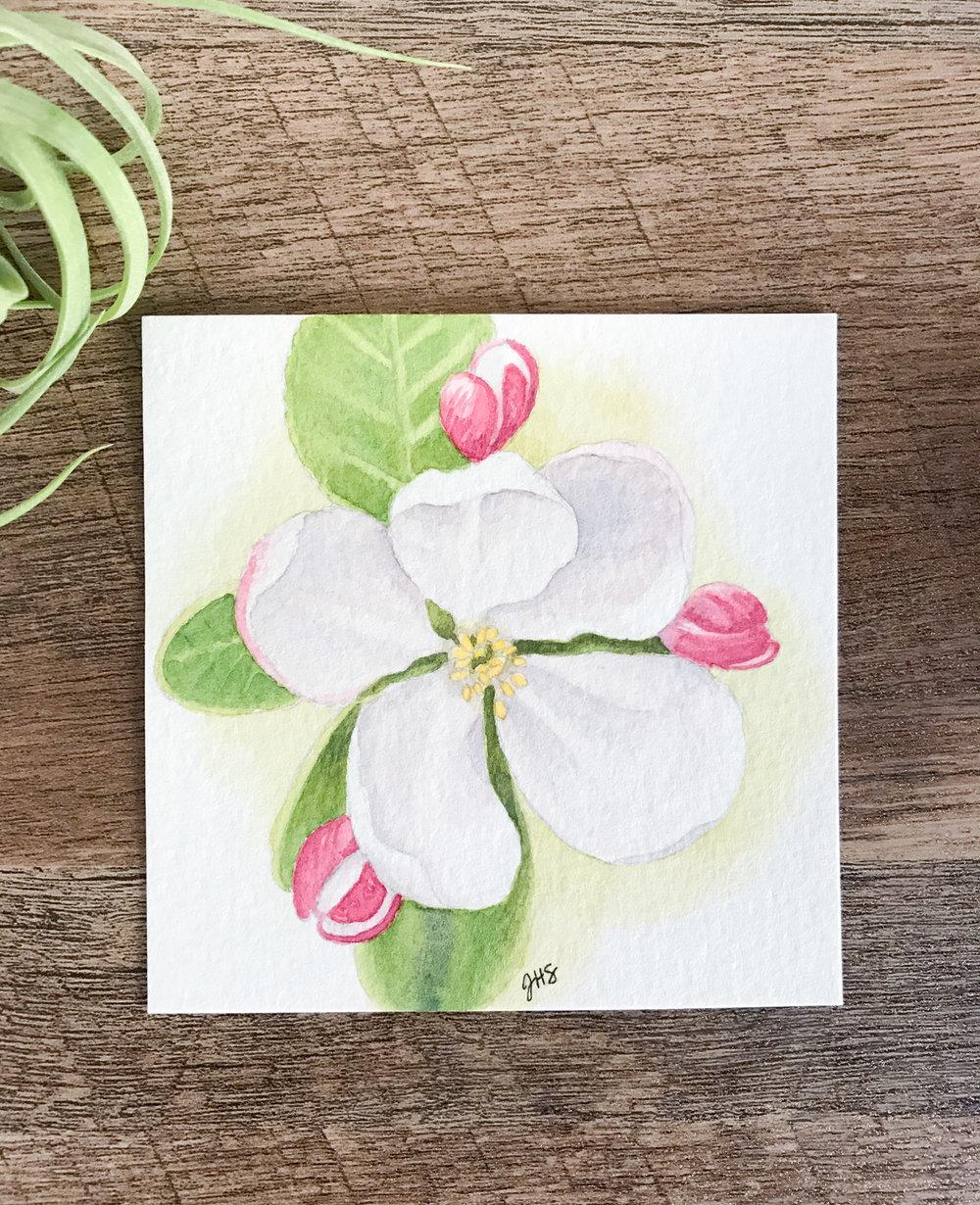 20-appleblossom-1.jpg