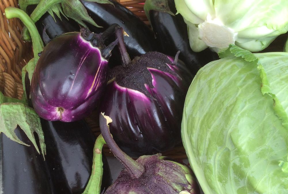 eggplantcropped.JPG