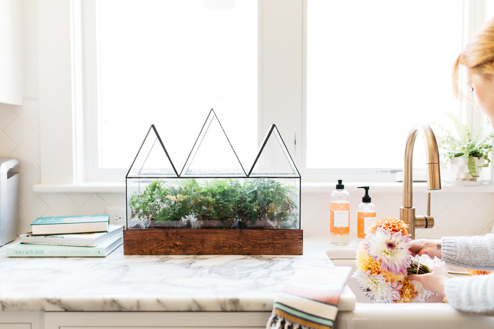 Fortune's Case Terrarium in the home of T&B owner, Diana Marsh.  Photo by Cat Buswell