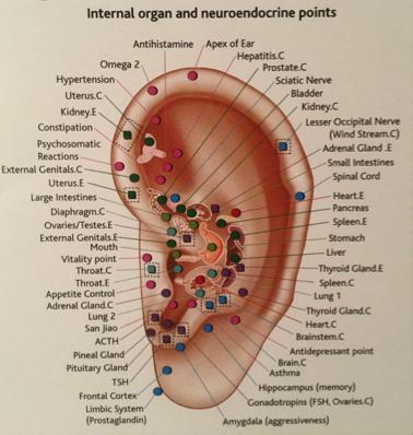 ear acu.png