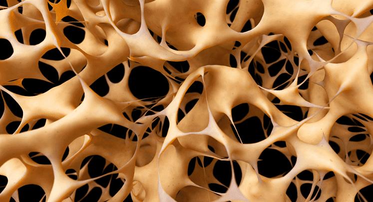 bonestrength trabiculae.png