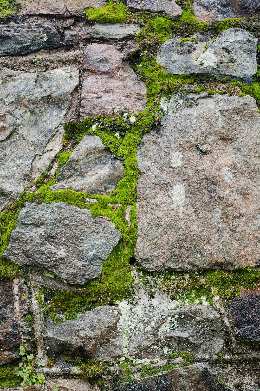 Kinsale Moss (1 of 1).jpg