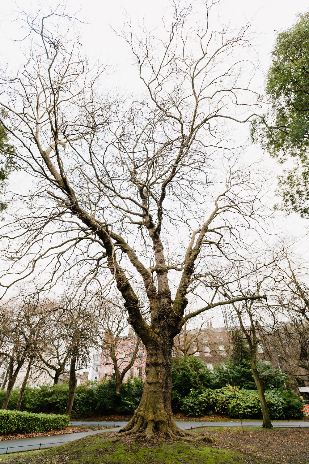 st stephens green tree.jpg