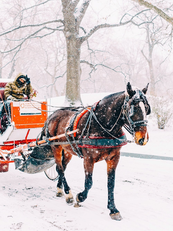 Central Park Horse & Carriage VSCO.JPG