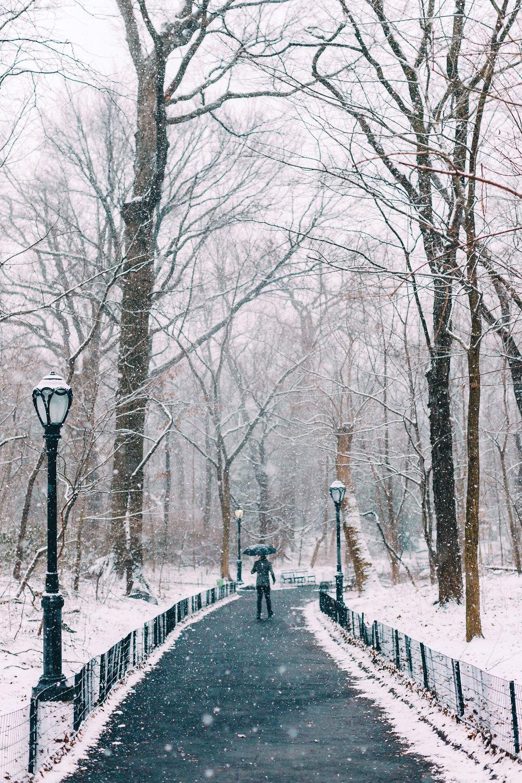 Central Park Man with umbrella.jpg