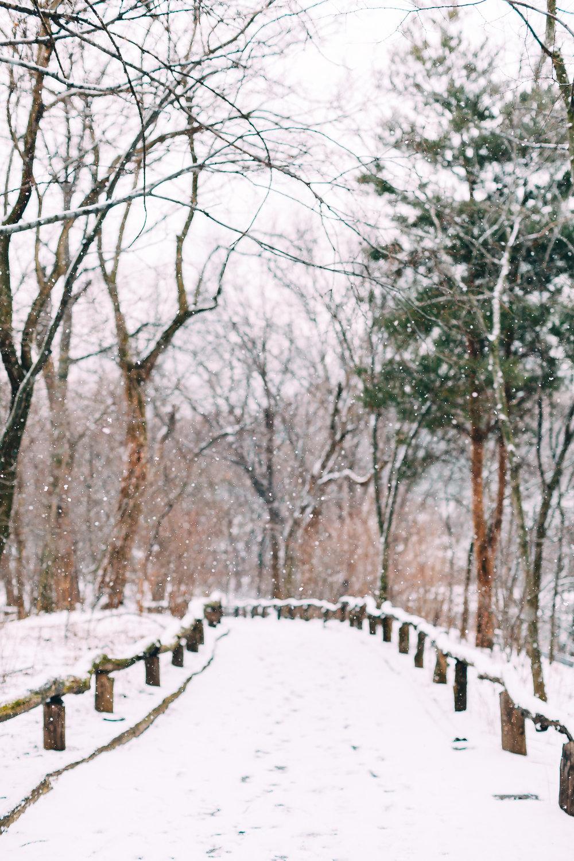 Central Park Road.jpg