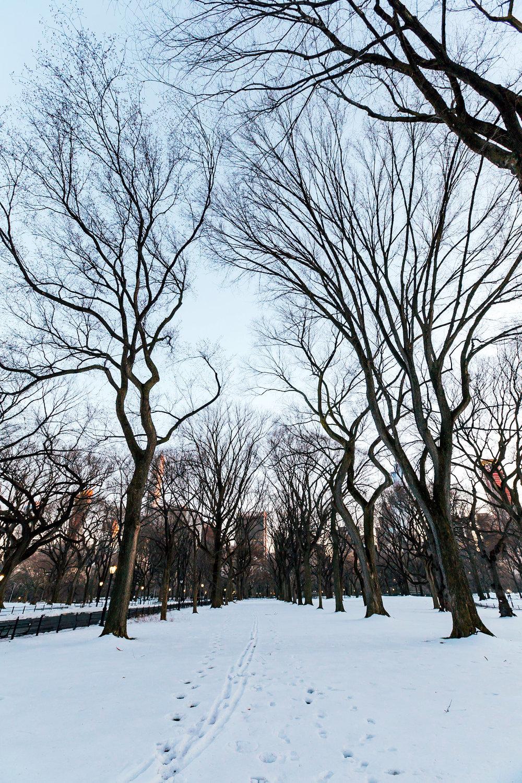 Central Park Trees copy.jpg